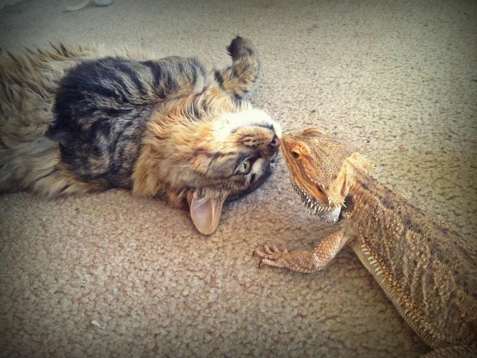 2. Пусть мы и разные, но это не мешает нам целоваться  дружба, кошка, ящерица