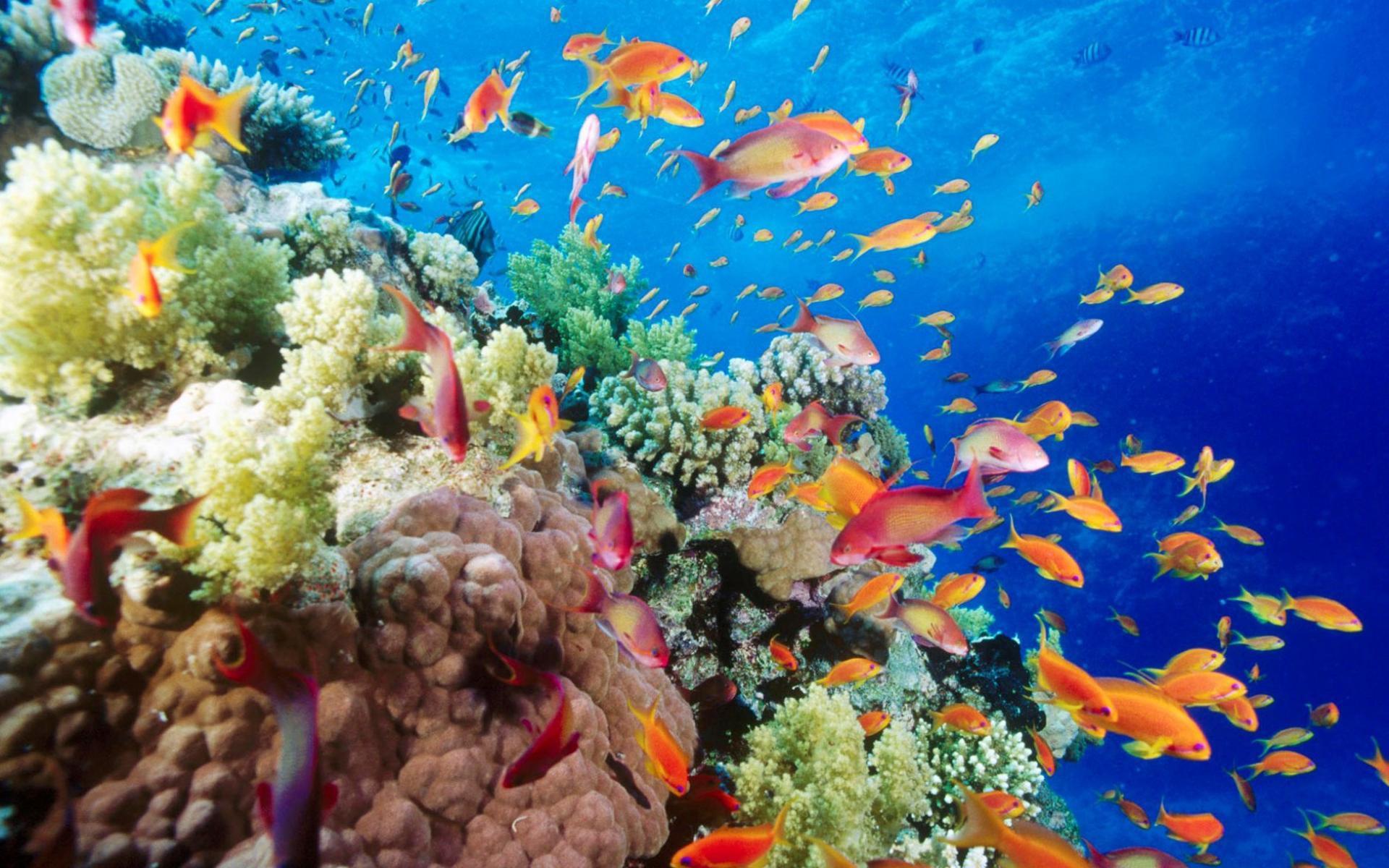 природа рыба море коралловый риф бесплатно