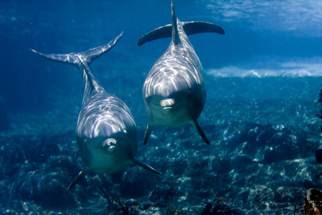 an essay on the dolphin circle awakening the awareness of dolphins Find and save ideas about angel readings on pinterest this dolphin synchronicity invites a mental health tips awareness happiness wellness self care recovery.
