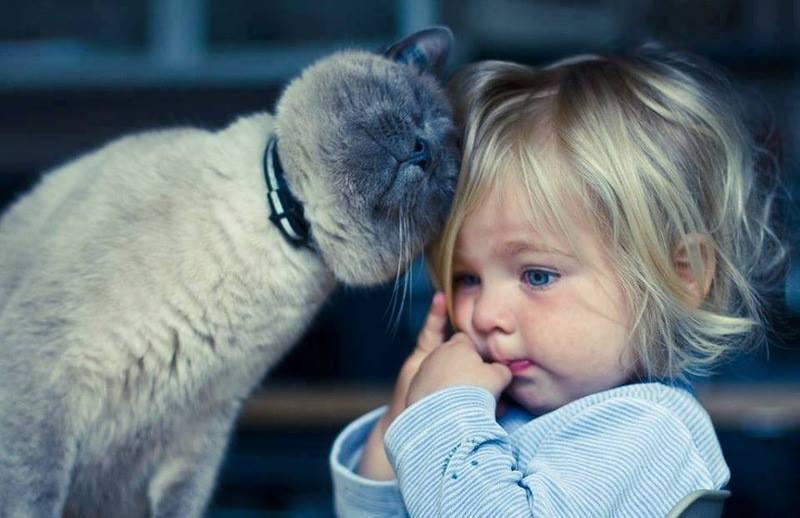 Картинки по запросу кот и ребенок