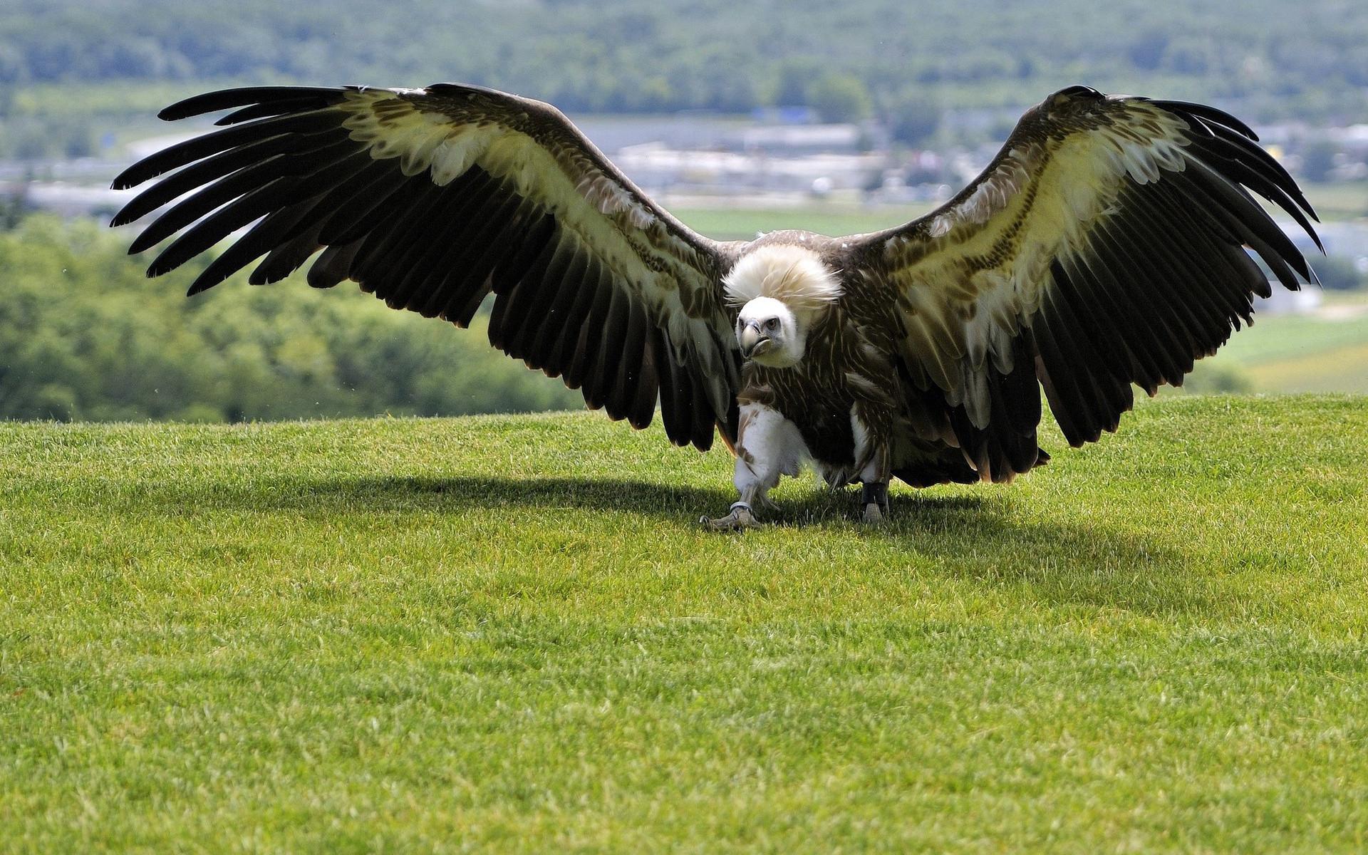 него картинки самых больших птиц в мире сазана духовке, без