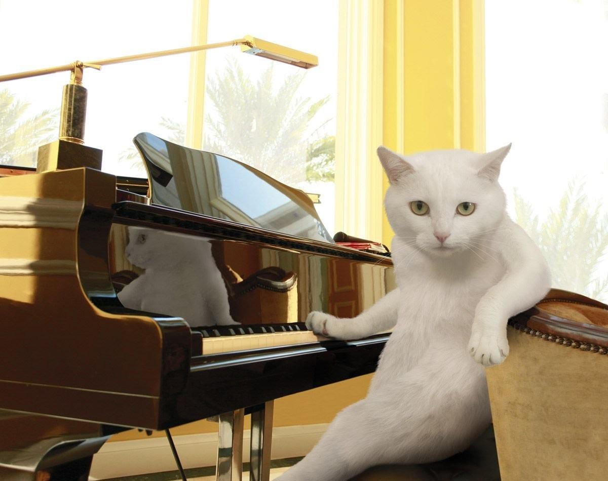 Игра на пианино картинки смешные