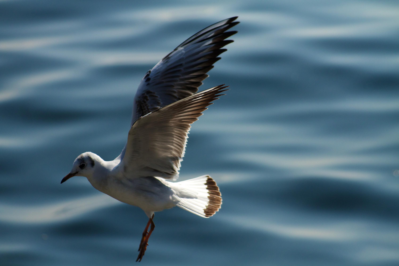 хочется чего-то чайка фото птица причина тому