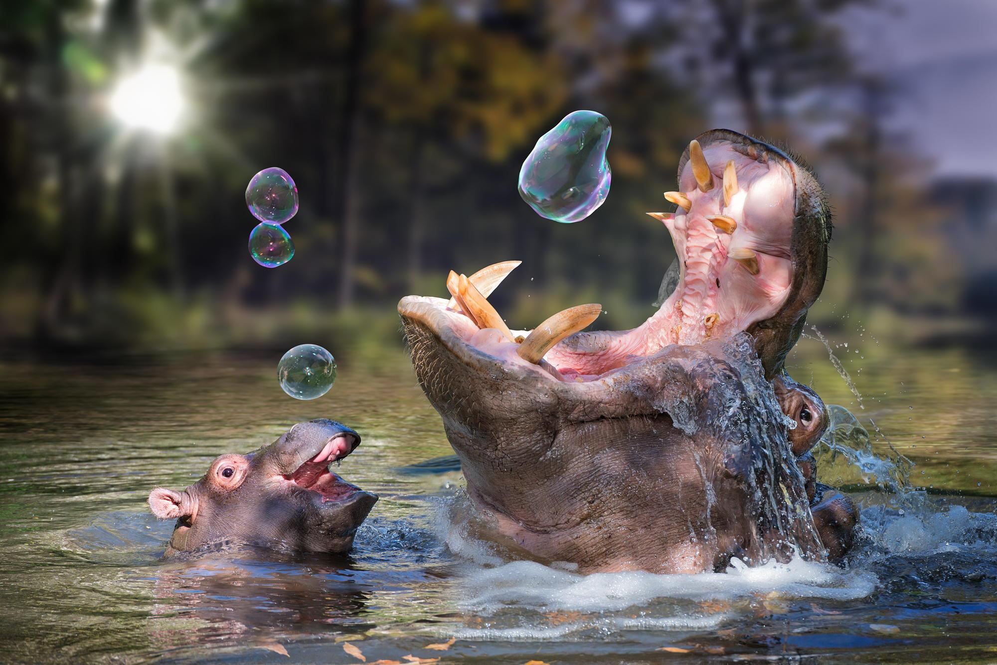 Фото чудесные веселые смешные необычные