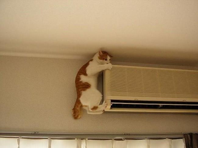Картинки кот и кондиционер