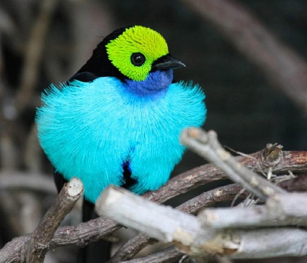 самые красивые животные на планете смотреть фото ящики под