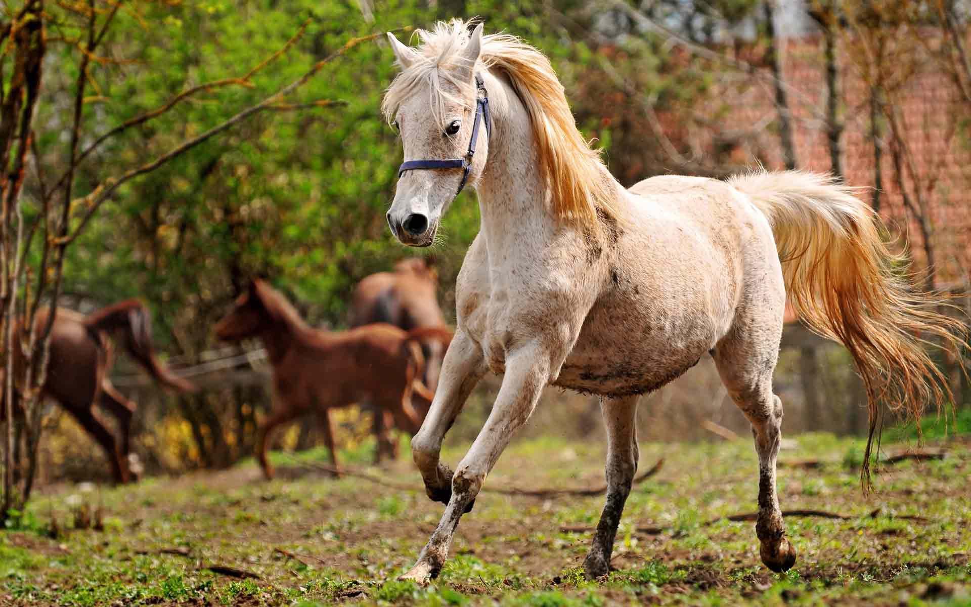 картинка с лошадью жилет костюмной ткани