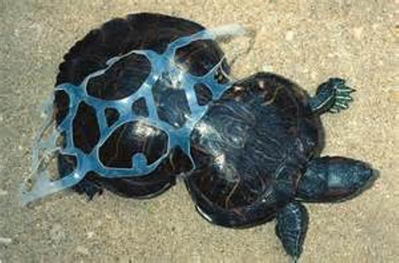 Гигантский остров из мусора в Тихом океане еда, животные, факты, экологическая катастрофа
