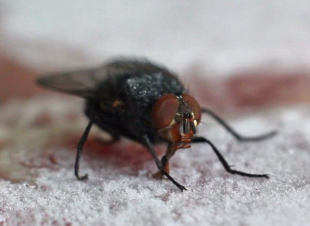 Эротика сексуальная муха