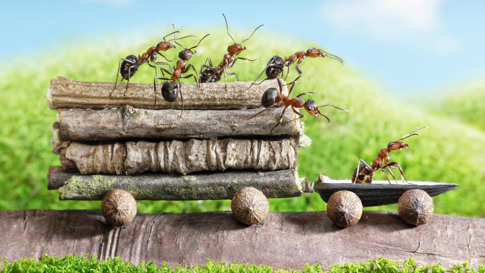 Картинки, прикольный муравей картинки