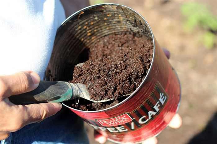 6. Молотый кофе удобрит землю и отпугнёт насекомых сад, советы, хитрость