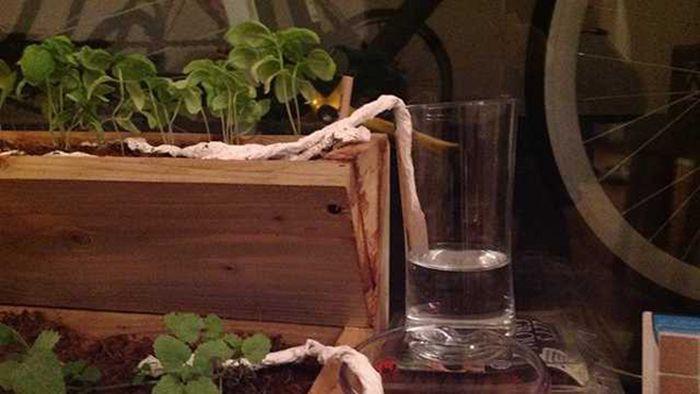 8. Бумажное полотенце обеспечит растению постоянный полив сад, советы, хитрость