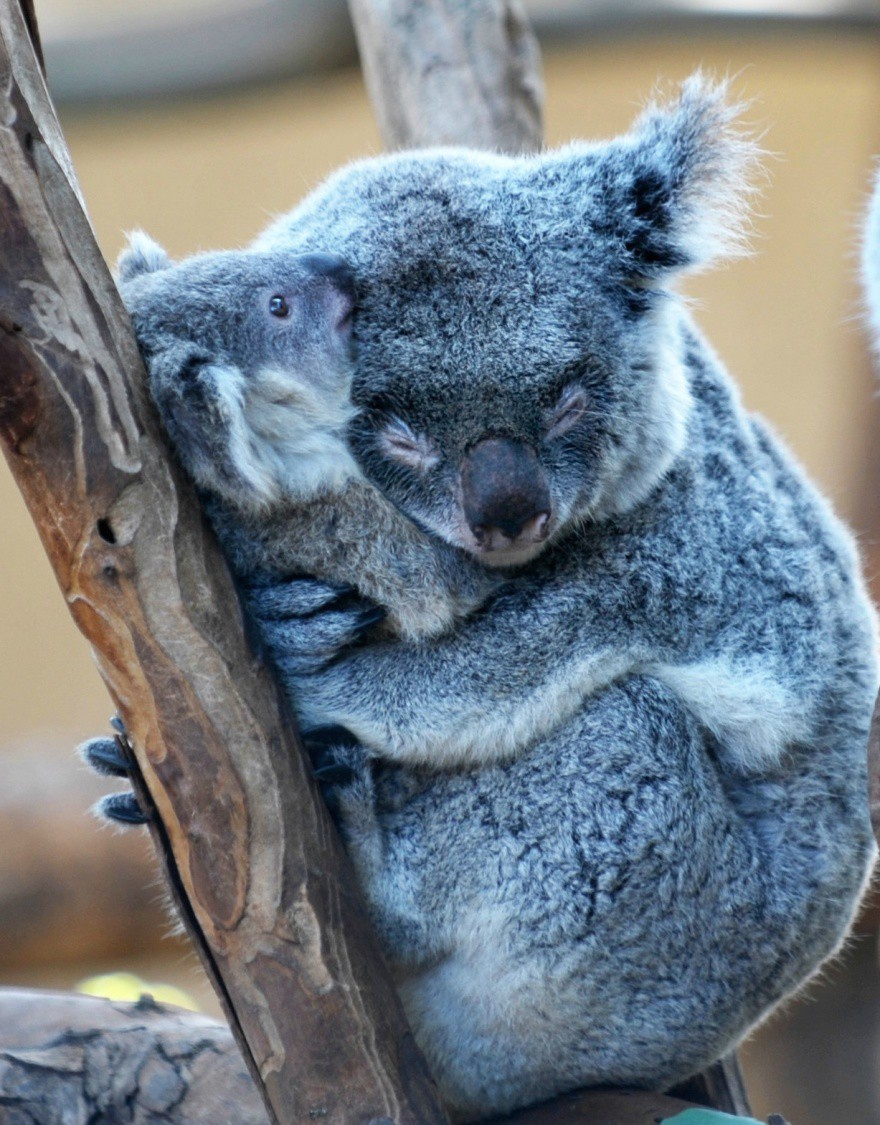 пустая милые картинки обнимашек животных бесплатно