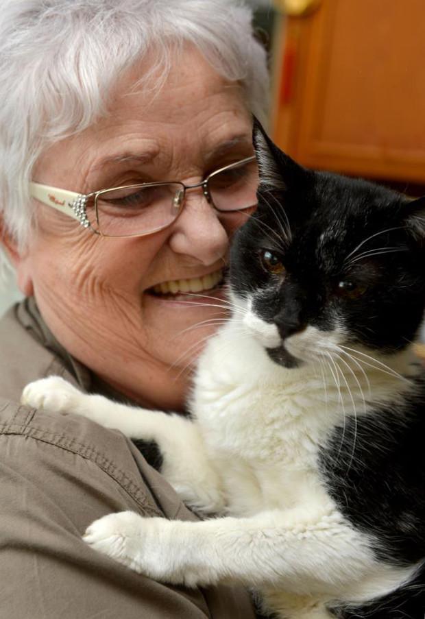 Best cat litter for elderly cats