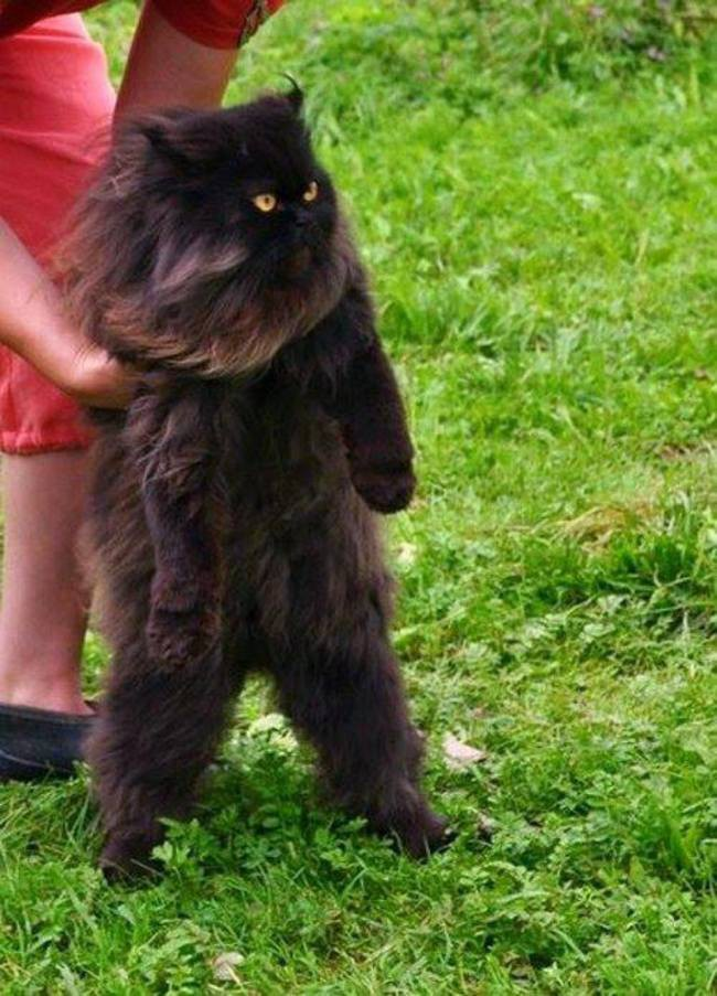 letting your kitten outside for the first time