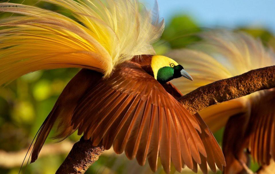 Картинки всех птиц мира