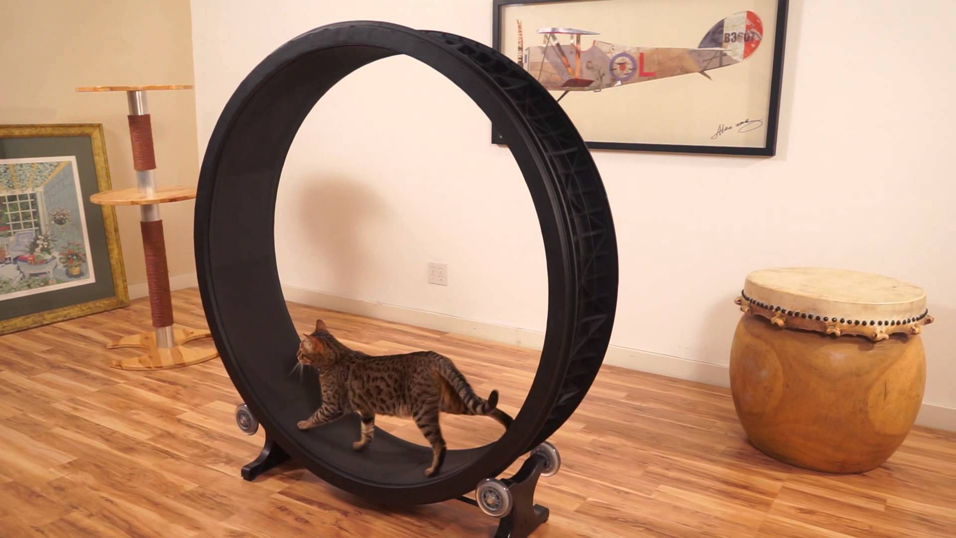 One Fast Cat ($344 911). Kickstarter, деньги, юмор