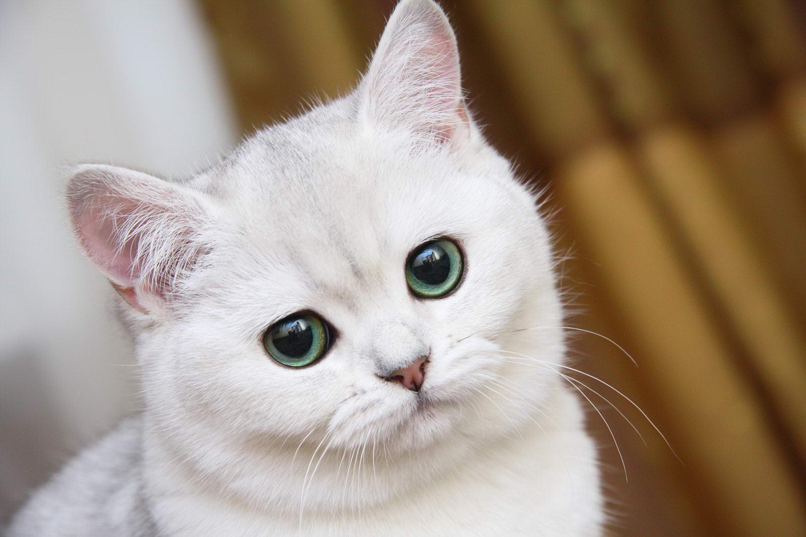 картинки желающих кошек фото