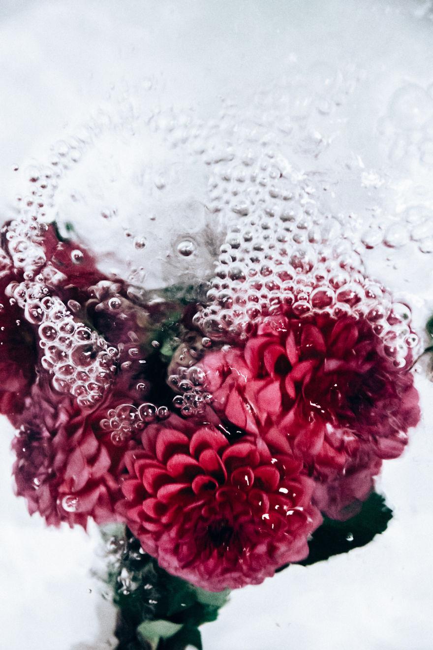 цветы под водой фото дорогостоящие скакуны