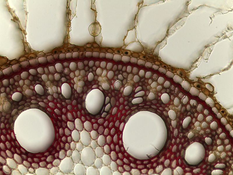 "Ежегодный конкурс микрофотографии ""Nikon Small World "" конкурс, микрофотография, факты, фотография"