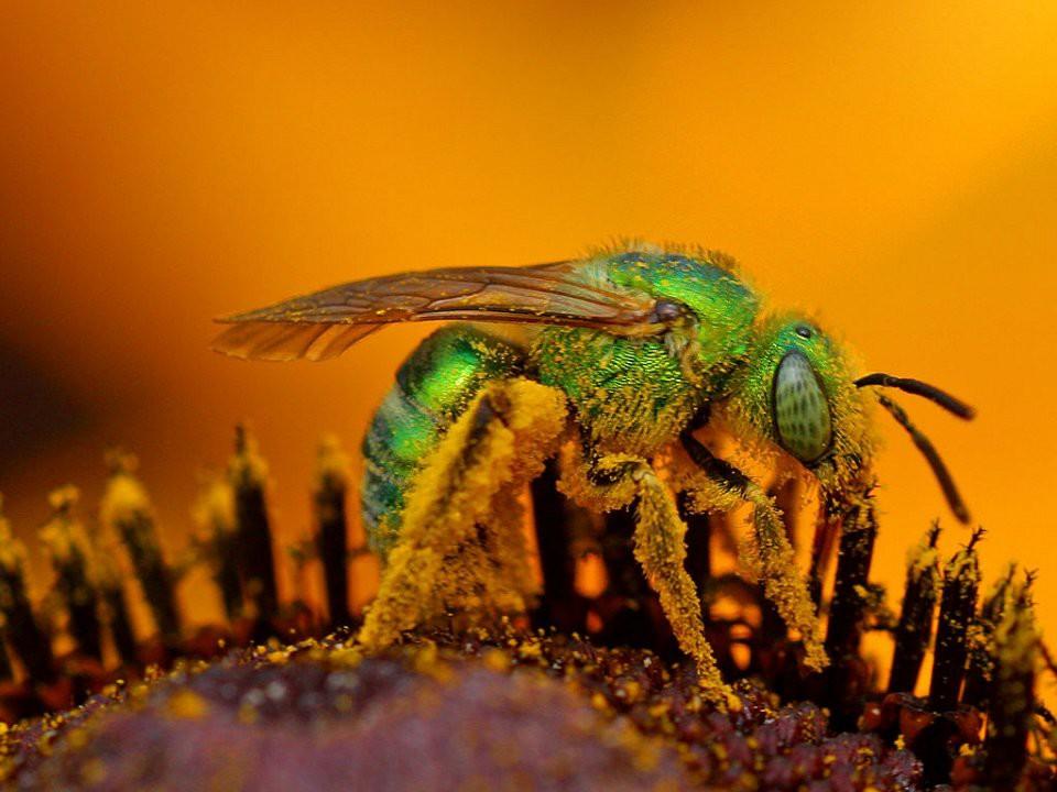 Появились маленькие коричневые жучки? 5 лучших способов борьбы    Черное летающее насекомое