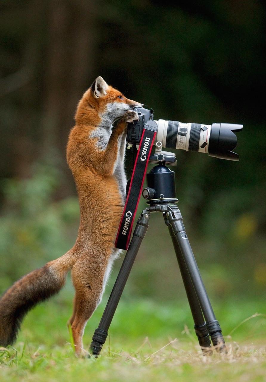 Шкала экспозиции в фотоаппарате для