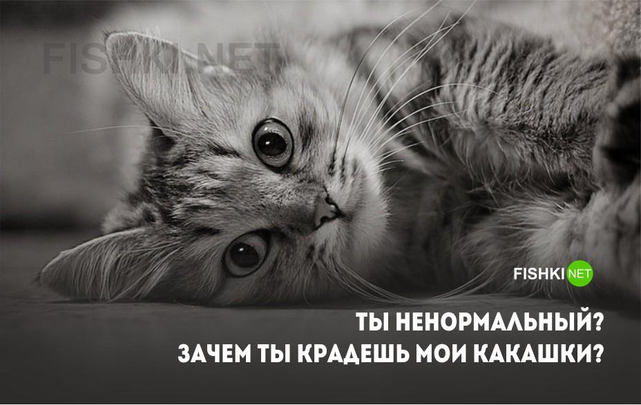 Картинки мысли кошки