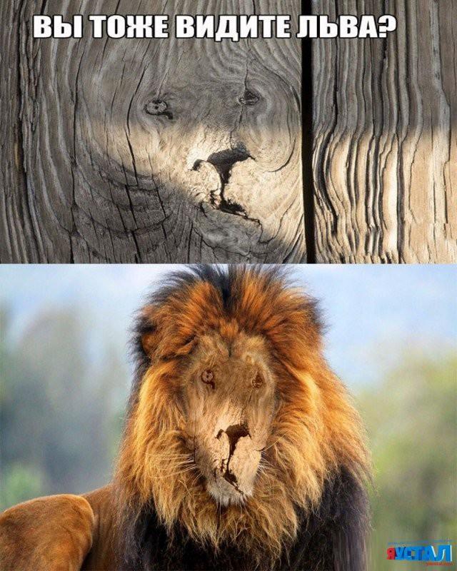 Прикольные картинки львов с надписями, сделать розу