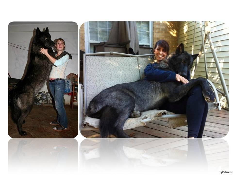 10 необычных пород собак и кошек