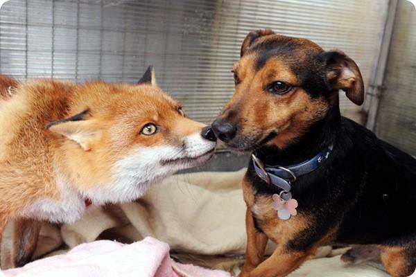 Выведенные породы собак и кошек thumbnail