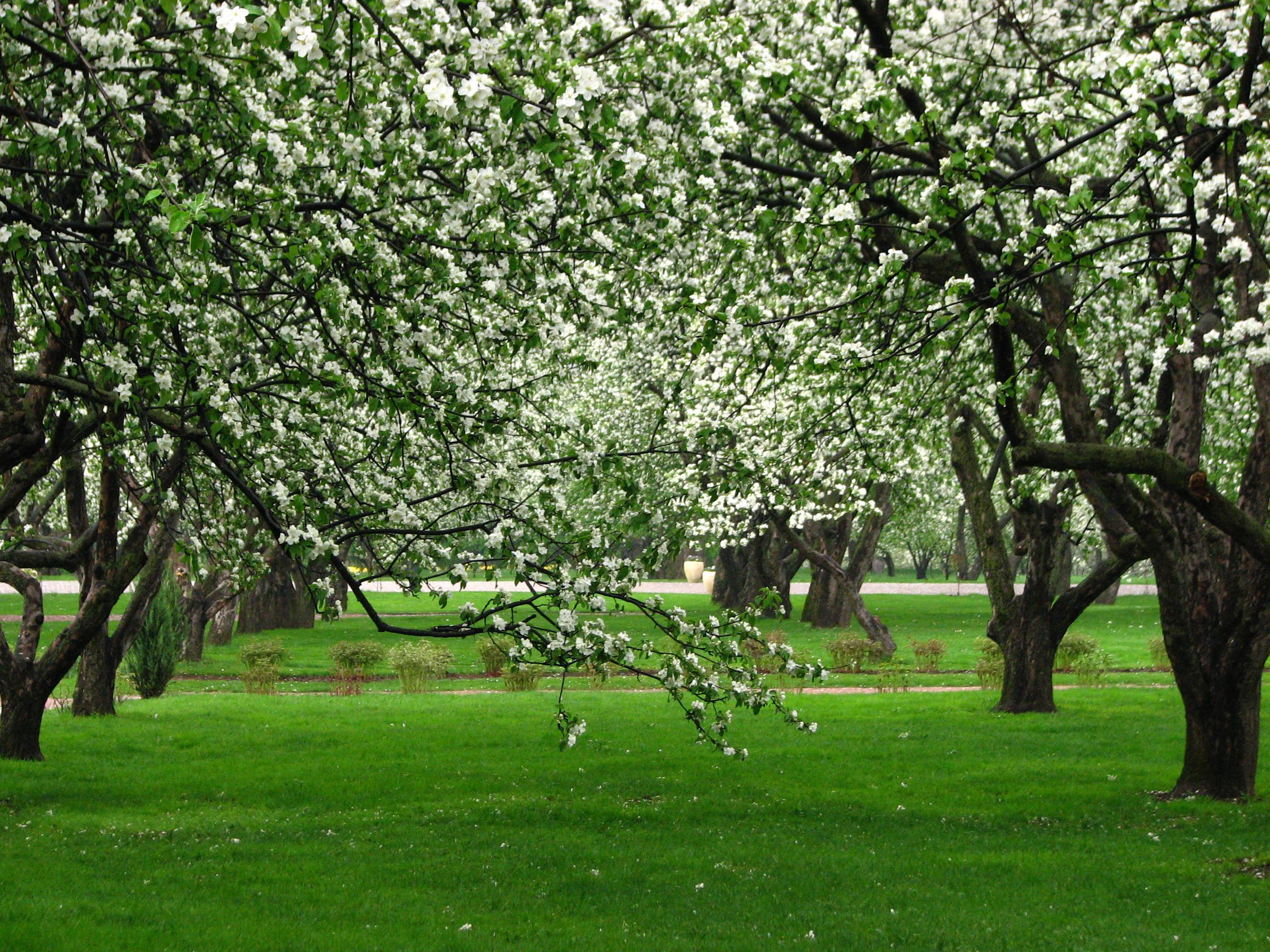 Своими, открытки яблоневый сад