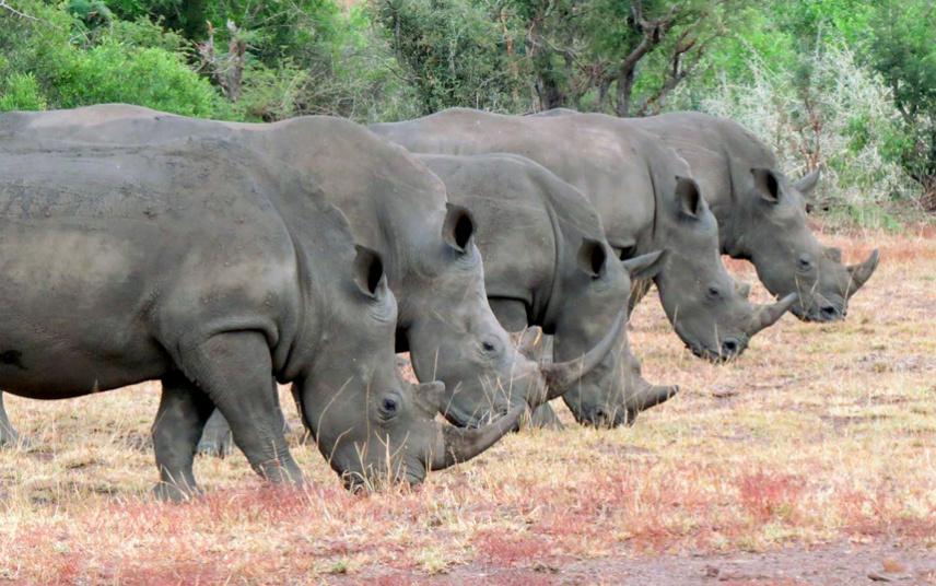Носорог картинки прикольные