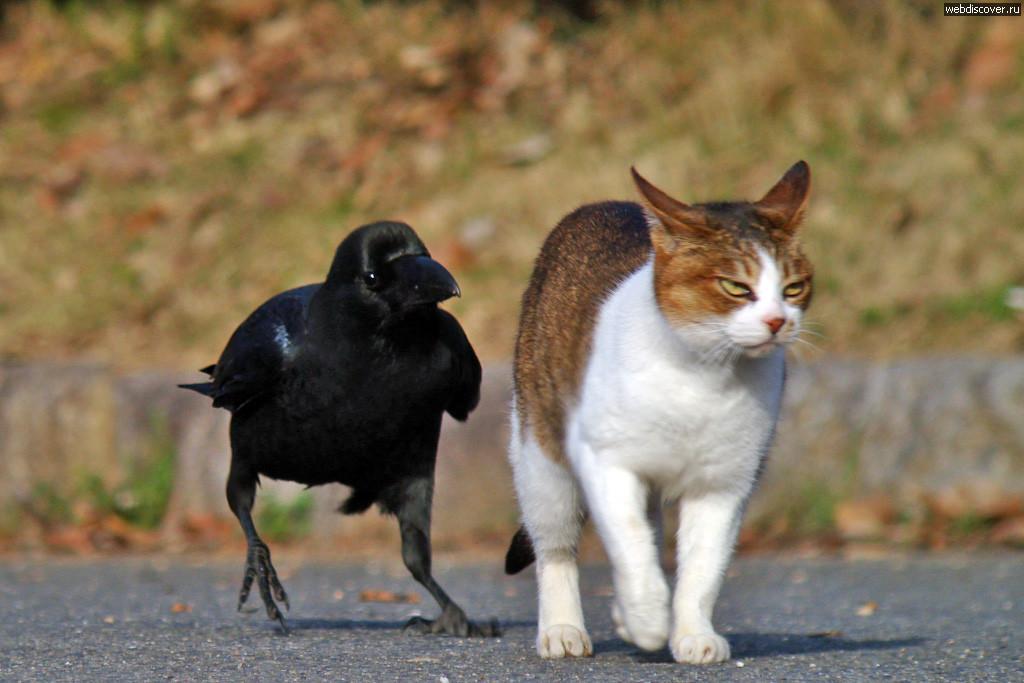 почему птицы не разговаривают а люди разговаривают