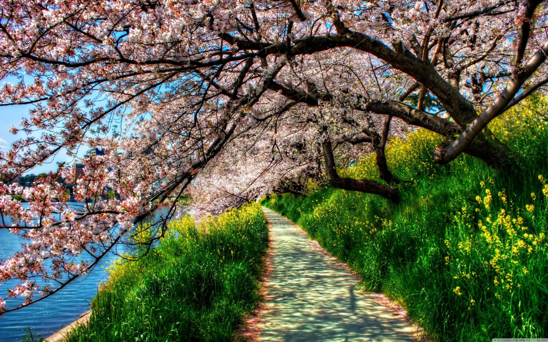 spring wallpaper free - HD1680×1050