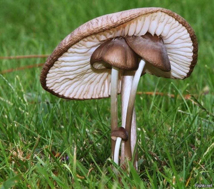 Смешные картинки грибов нет