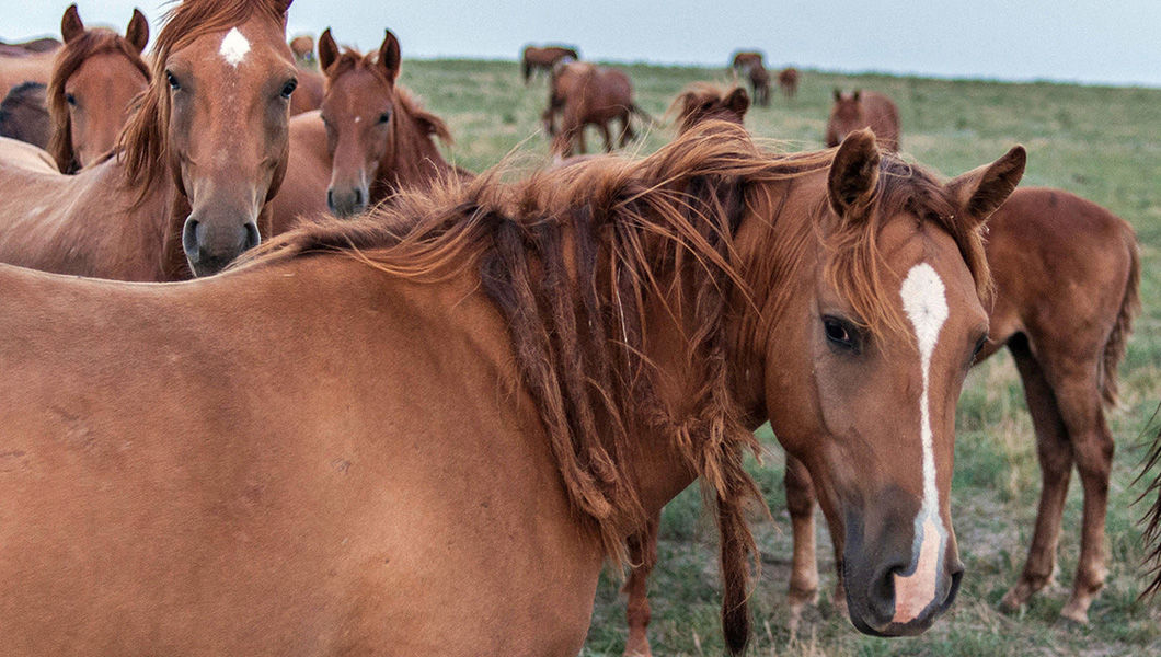 Сношение лошадей смотреть онлайн