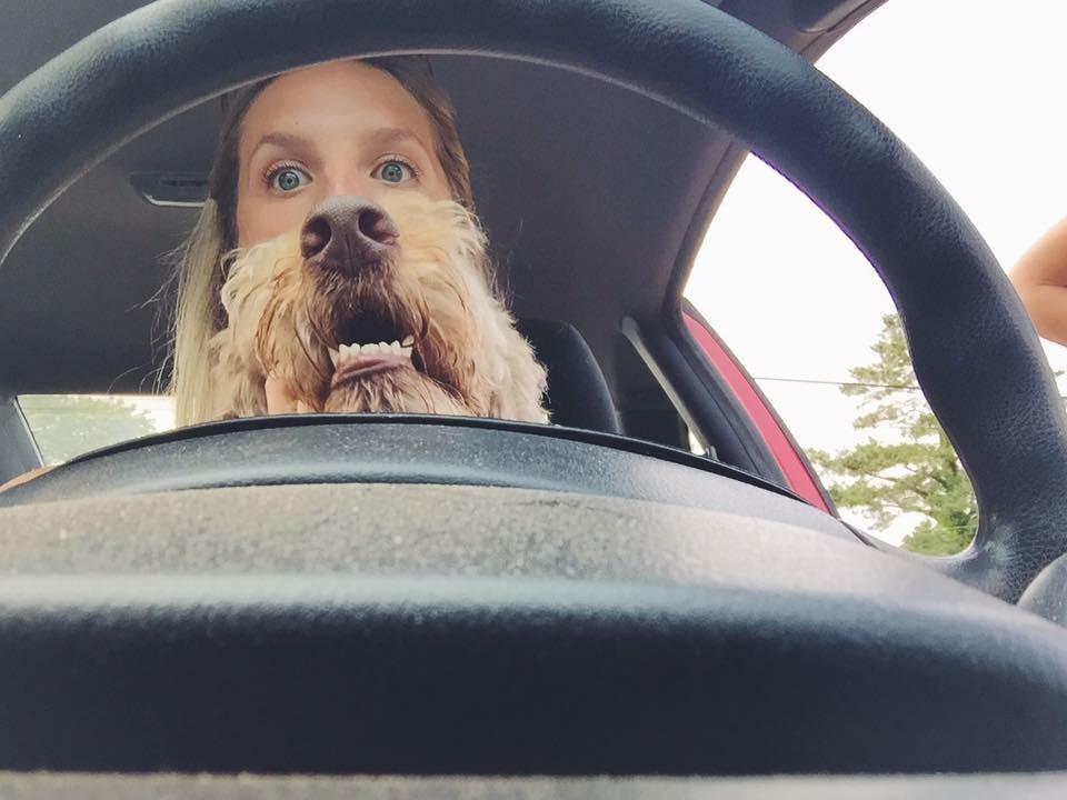 собака за рулем картинки смешные резистора