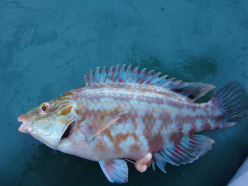 виды рыб черного моря фото сама сделать