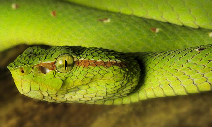 смотреть картинки змей качестве параметров