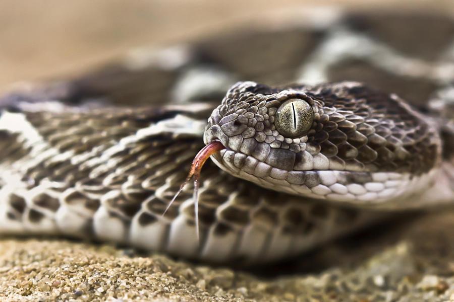 Смотреть картинки змей то, чтобы
