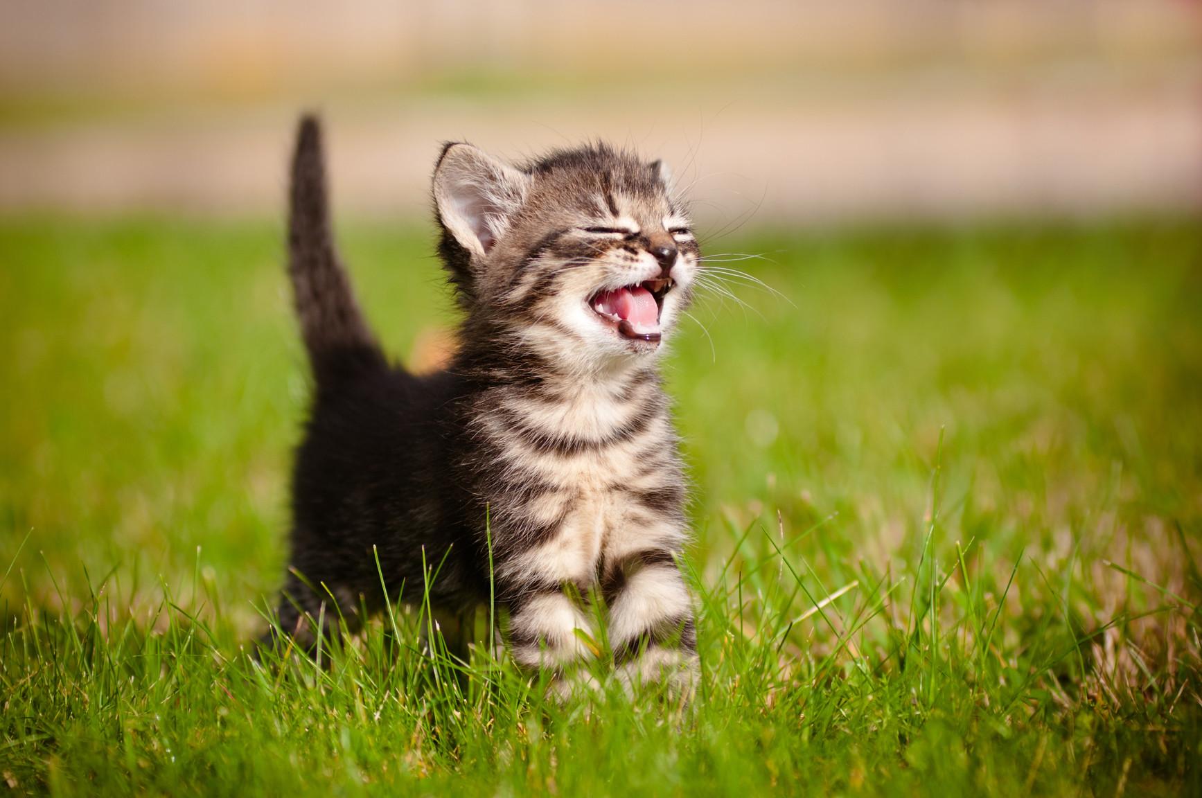 kitten baden