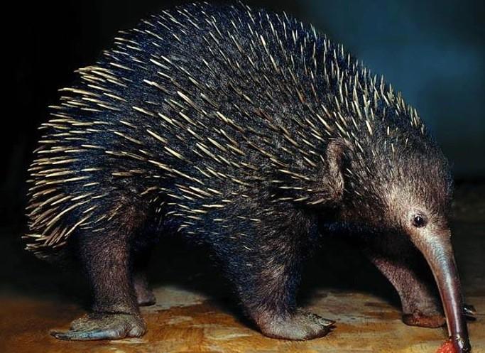 Самые необычные животные в мире d3ff54aa777ce