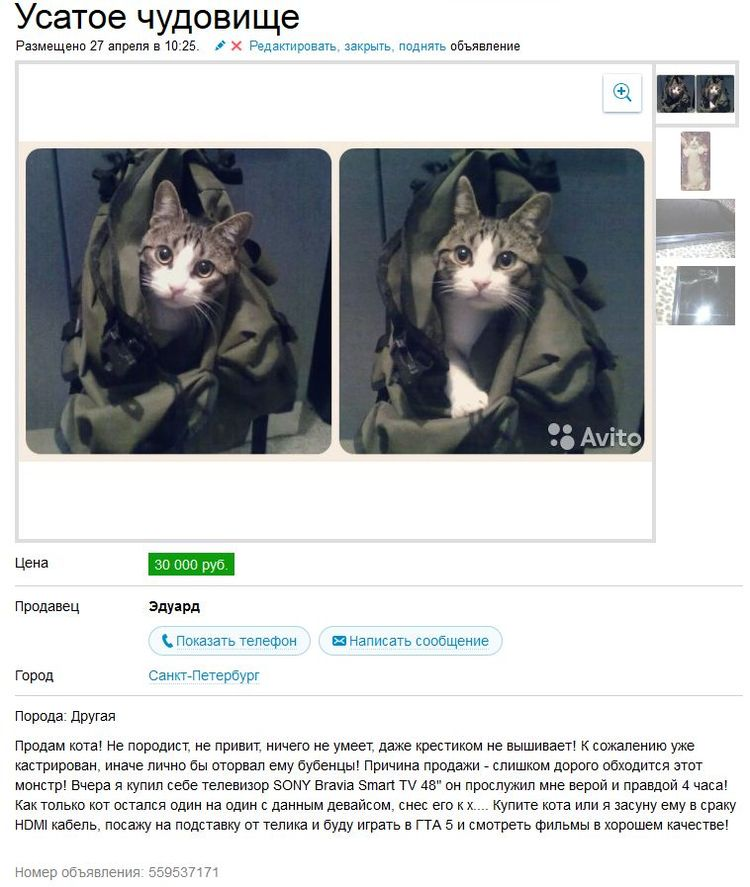Дать бесплатное объявление животного фото купить авто в питере с пробегом частные объявления фольксваген туран