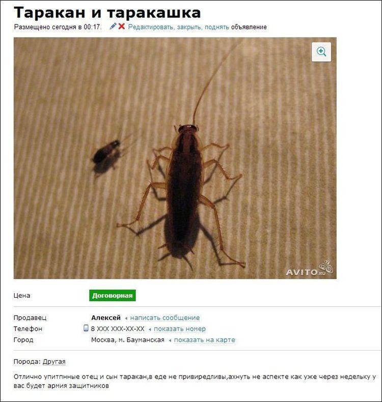 Разместить объявление про животных бесп подать бесплатное объявление на сландо.ру уфа