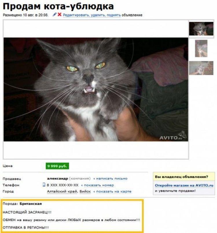 Новое объявление отдам котёнка в хорошем качестве retail realtor ru закрытая продажа арендного бизнеса