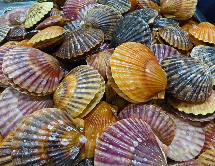 3. Морские гребешки имеют до 100 глаз, которые чаще всего голубого цвета интересное, факт
