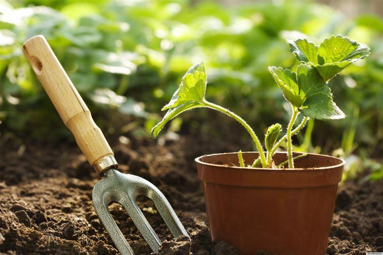 7. У растений есть семьи интересное, факт