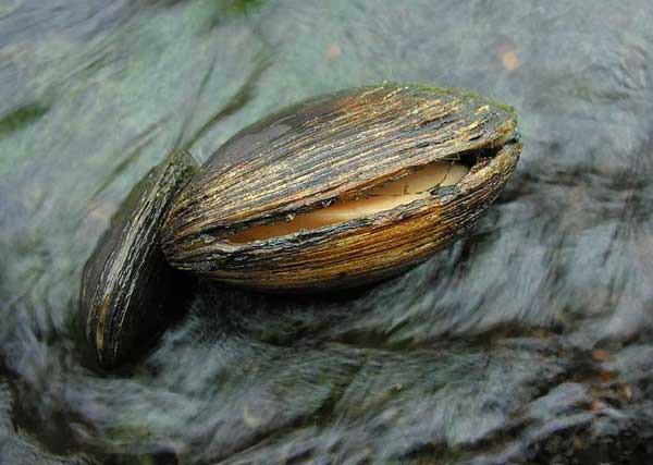 13. Старейшим живым существом на нашей планете был 507-летний моллюск. Он бы и дальше жил, но ученые убили его по ошибке интересное, факт