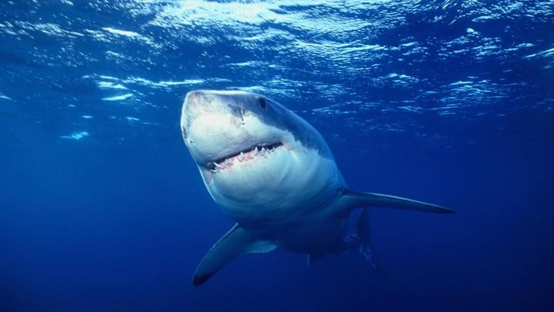 14. Акулы могут жить до 100 лет интересное, факт
