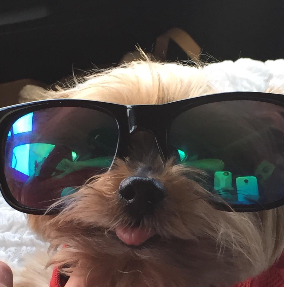 Крутые картинки собаки в очках